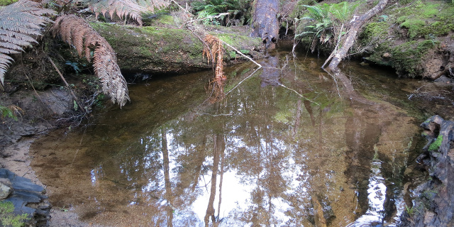 Photograph of wide pool in creek. The pool is reflecting nearby trees.