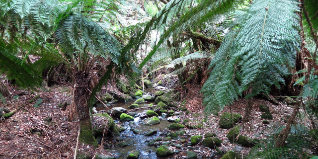 Photograph of creek flowing under ferns and over mossy stones.