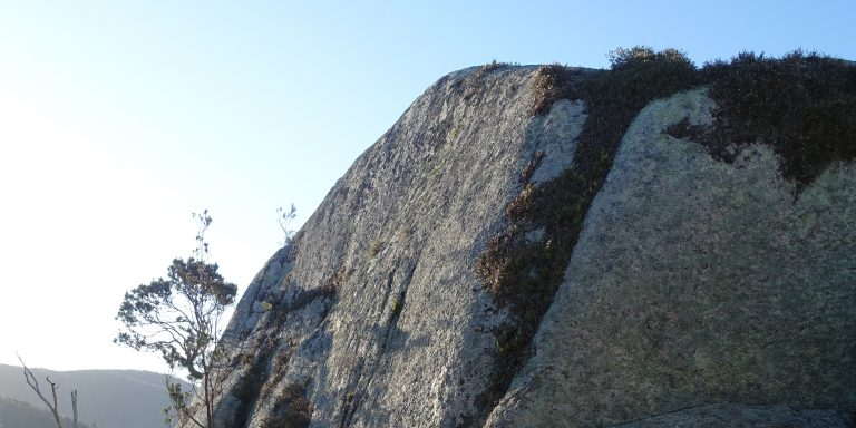 Photograph of granite rock outcrop with occasional plants growing on it.