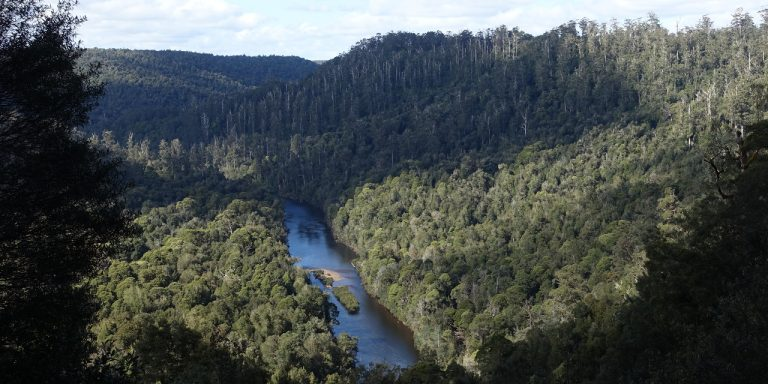 Photograph of wide river winding through forest.