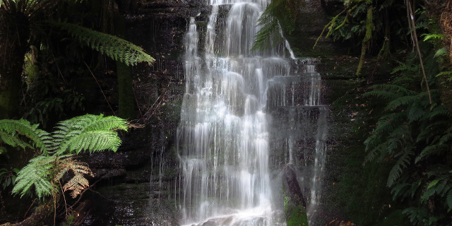 Photograph of waterfall between tree ferns.