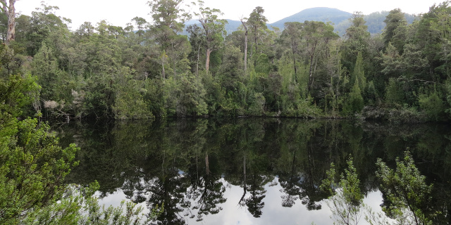 Photograph of small lake surrounded by trees, with reflections.